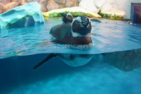 かわいいペンギンのイメージの写真素材 [FYI02981949]