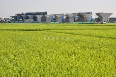 田んぼと建設中の道路の写真素材 [FYI02982050]