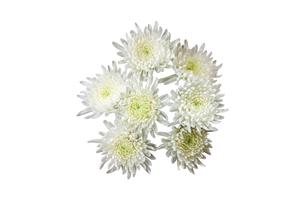 菊の花束の写真素材 [FYI02982079]