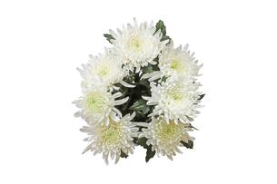 菊の花束の写真素材 [FYI02982080]