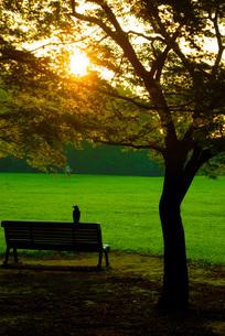 早朝の神代公園の写真素材 [FYI02982087]
