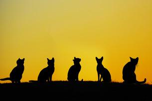 丘に立つ猫のイメージの写真素材 [FYI02982108]