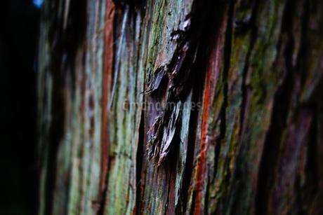 樹木イメージの写真素材 [FYI02982153]