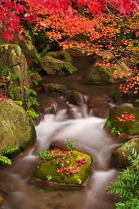 紅葉した木々とせせらぎの写真素材 [FYI02982274]