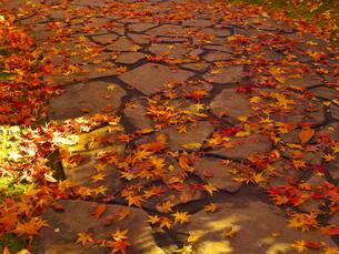 庭園の路面を覆う紅葉の落ち葉の写真素材 [FYI02982282]