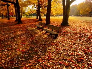 ベンチと周辺に堆積した落ち葉の写真素材 [FYI02982295]