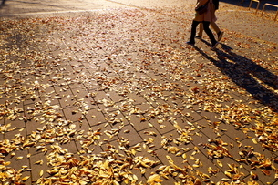落ち葉の歩道と人影の写真素材 [FYI02982305]