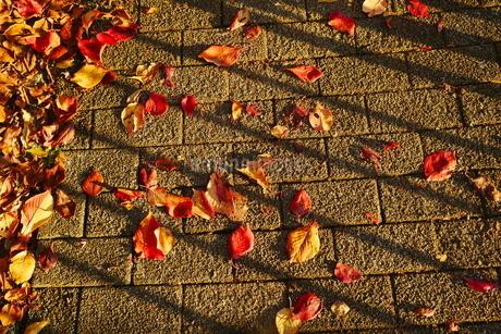 歩道と落ち葉の写真素材 [FYI02982312]