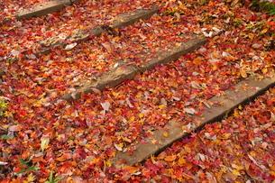 階段状の園路と堆積した落ち葉の写真素材 [FYI02982313]