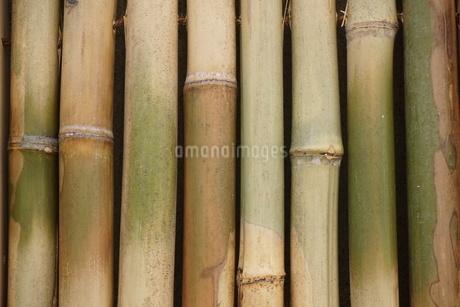 竹の写真素材 [FYI02982314]