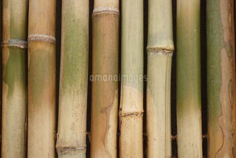 竹の写真素材 [FYI02982316]