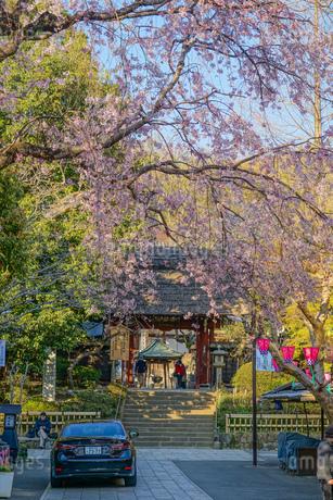 調布市深大寺の桜と街並みの写真素材 [FYI02982406]