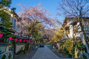 調布市深大寺の桜と街並みの写真素材 [FYI02982407]
