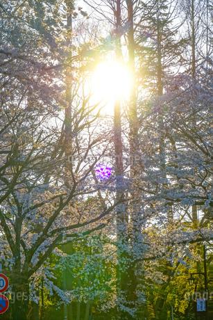 調布市深大寺の桜と街並みの写真素材 [FYI02982419]