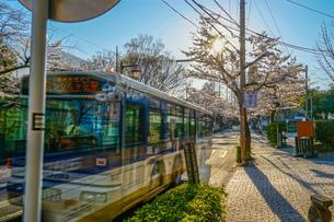 調布市深大寺の桜と街並みの写真素材 [FYI02982420]