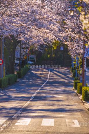 調布市深大寺の桜と街並みの写真素材 [FYI02982421]