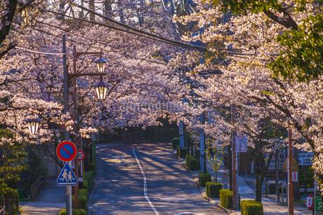 調布市深大寺の桜と街並みの写真素材 [FYI02982422]