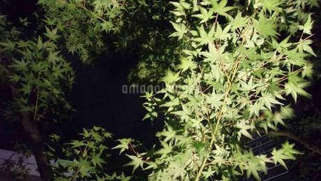 緑色の葉の写真素材 [FYI02982508]