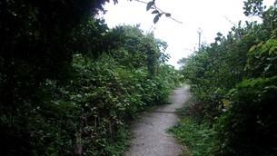 室戸岬の緑道2の写真素材 [FYI02982600]