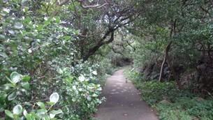 室戸岬の緑道の写真素材 [FYI02982601]