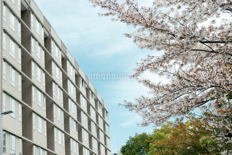 春の写真素材 [FYI02982676]