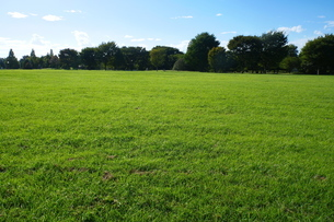 広がる草地と林の写真素材 [FYI02982749]