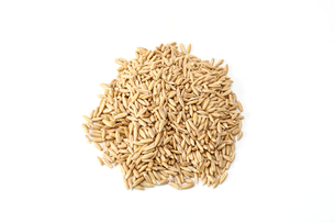 燕麦の写真素材 [FYI02982760]