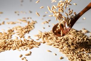 燕麦の写真素材 [FYI02982761]