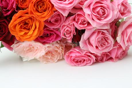 薔薇の花束の写真素材 [FYI02982767]
