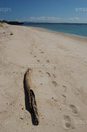 エメラルドグリーンの海と白い砂浜の流木と足跡の写真素材 [FYI02982933]
