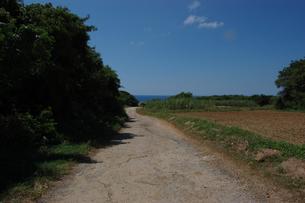 エメラルドグリーンの海へ続く田舎の一本道の写真素材 [FYI02982934]