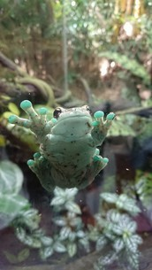 カエルの写真素材 [FYI02983214]