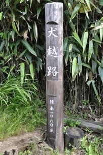 西丹沢 犬越路の写真素材 [FYI02983234]