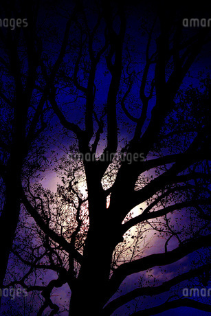 漆黒の木の写真素材 [FYI02983470]