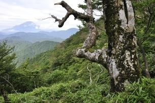 山地に立つ古木の写真素材 [FYI02983494]