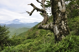 山地に立つ古木の写真素材 [FYI02983496]