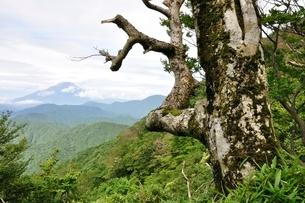 山地に立つ古木の写真素材 [FYI02983498]