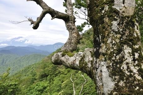 山地に立つ古木の写真素材 [FYI02983509]