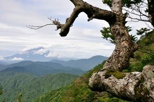 山地に立つ古木の写真素材 [FYI02983511]