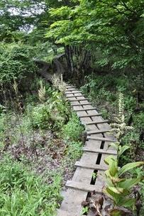 森に続く木道の写真素材 [FYI02983523]