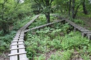 森に続く木道の写真素材 [FYI02983525]