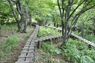 森に続く木道の写真素材 [FYI02983528]