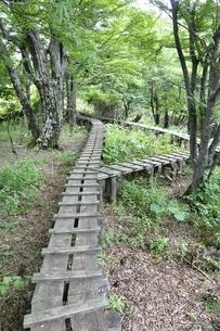 森に続く木道の写真素材 [FYI02983529]