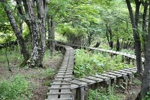 森に続く木道の写真素材 [FYI02983531]