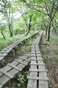 森に続く木道の写真素材 [FYI02983535]