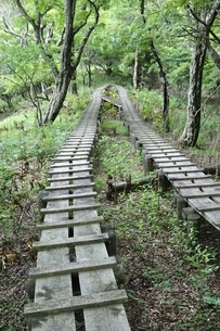 森に続く木道の写真素材 [FYI02983536]