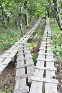 森に続く木道の写真素材 [FYI02983538]