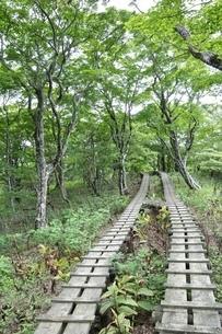 森に続く木道の写真素材 [FYI02983542]