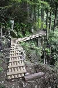 東海自然歩道 西丹沢の木道の写真素材 [FYI02983560]