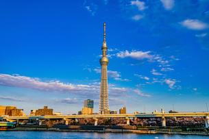 東京スカイツリーと晴天の空の写真素材 [FYI02983623]